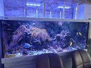 Meerwasser Aquarium RedSea Max S650