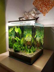 Dennerle Nano Aquarium 20 L