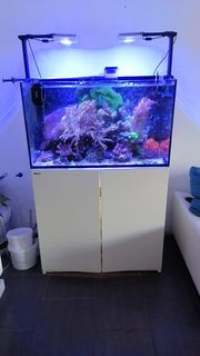 Red sea reefer 250 meerwasser