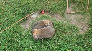 HASENSTALL und 2 Hasen