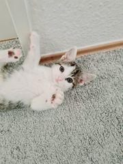 Baby Haus Katze in gute