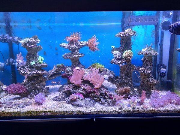 Meerwasseraquarium komplett mit Besatz