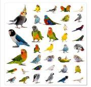 Ich nehme gerne Sittiche Papageien