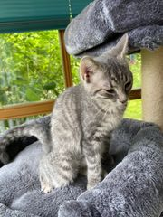 Kleine Katzendame sucht wieder
