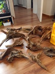 Mangroven Holz Terrarium Kiefer