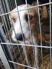 SALLY - wunderbares liebes Hundemädchen- schenkst
