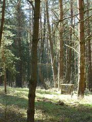 Waldgrundstück am Rothsee 2322 qm