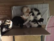 Junge Kätzchen zu vergeben