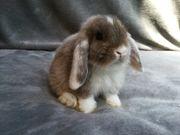 Verschiedene Tolle Kaninchen Babys Günstig
