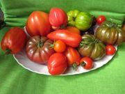 Tomatensamen Bio Qualität