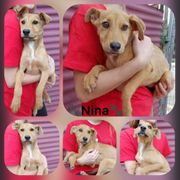 Welpe Hündin Nina 6 Monate