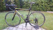 Rennrad Bergamont Dolce LTD - Carbon -