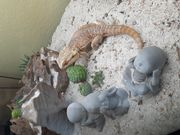 Aquarium Terrarium mit Bartagame