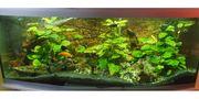 Komplettauflösung 600l Aquarium mit Unterschrank