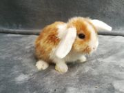 Tolle Mini Lop Kaninchen Babys