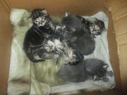 5 Süsse kleine Kitten