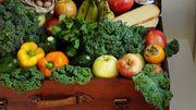 Gemüseversteher für die Kommissionierung m