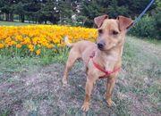 Tierschutzhund - Sammy -