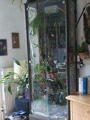 Vitrine mit für Orchideen Pflanzen