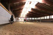 Pferdeboxen mit Paddock