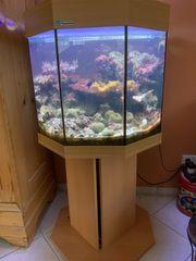 Meerwasseraquarium MP 8 eck Aquarium