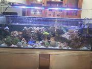 meerwasser aquarium komplettset ohne Inhalt