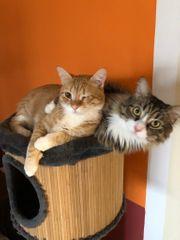 beste Katzenfreunde nur zu zweit
