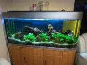 Aquarium 1 50 x 1
