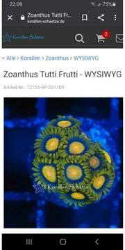 hallo ich suhe Zoanthus Tutti