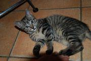 Ein Kätzchen knapp drei Monate