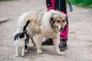 Tierschutzhündin Paula sucht ein Zuhause