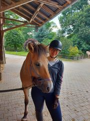 Reiter sucht Pferd Reitbeteiligung