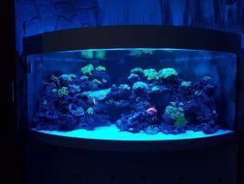 Bild 4 - Meerwasseraquarium 800L - Nürnberg