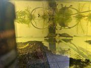 2 Höckerschidkröten abzugeben
