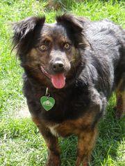 Jack-Charakterhund sucht Profis mit Herz
