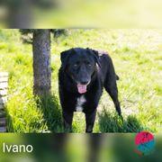 Ivano - Großes Herz in tollem
