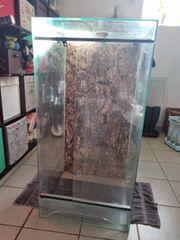 Terrarium 100 50 50