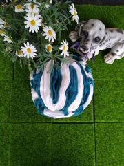 Blue s Schnüffelball aus Fleece