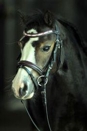 suche für meine Süßes pony