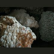 meerwasser Riffgestein Kilopreis 40 kg