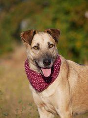 Klara - Knuddelhund sucht Menschen