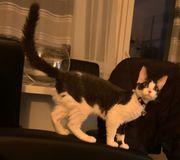 Can Don Sphynx Katze 7