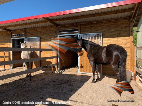 Modernen Pferdestall bauen Aussenboxen Pferdeboxen