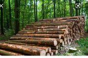 stammholz baumstämme