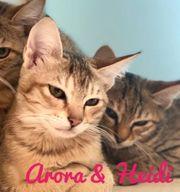 Katze Arora und Kitten Heidi