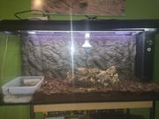 Aquarium als Terra umgebaut