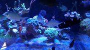 Riffbarsch Fisch Chromis viridis Schwalbenschwänzchen