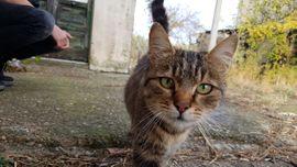 Zubehör für Haustiere - Ernährungsberatung Für Hunde Katzen