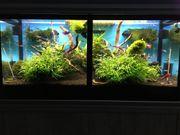 Aquarium Bodenfliter UV CO2