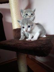Katzenbabys 2